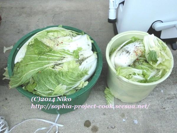 CIMG7154料理.jpg